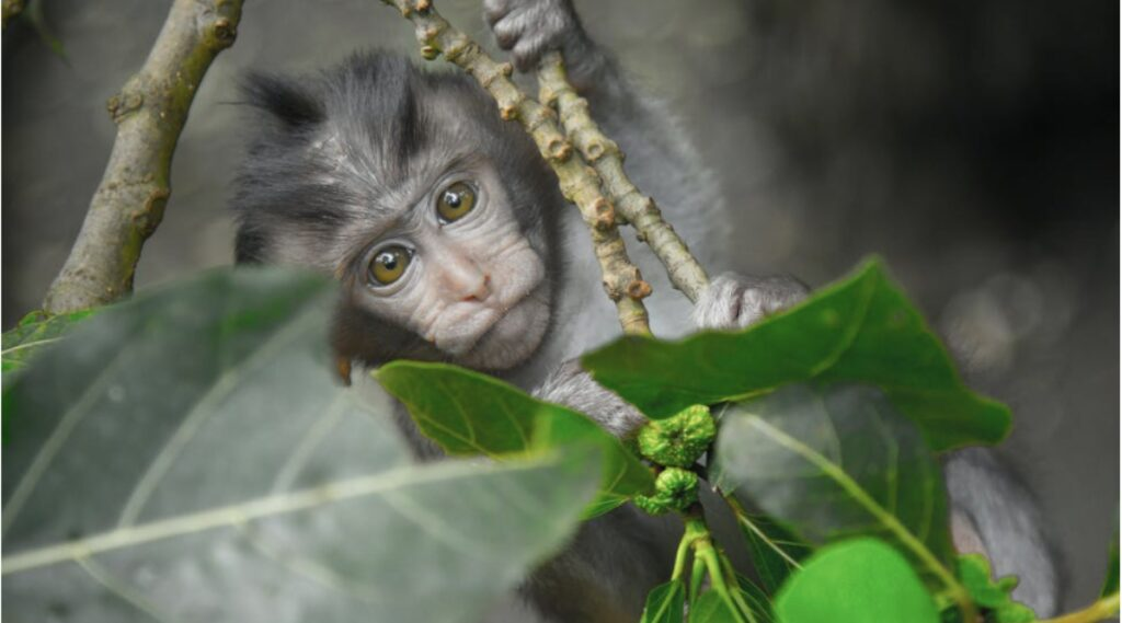 visit in bali monkey forests